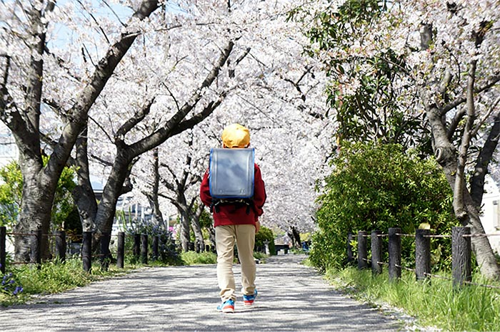 Spring in Japan - cherry blossoms